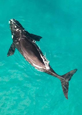 marine mammal- aerial view